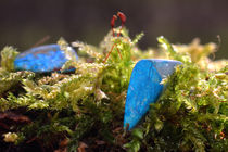 Türkis im Moos - Turquoise in the moss by ropo13