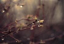 Rain. von Ekaterina Planina