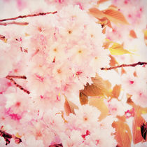 Spring love by AD DESIGN Photo + PhotoArt