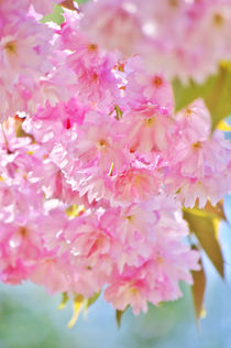 Pink Spring von AD DESIGN Photo + PhotoArt
