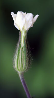 schönes Blütenbild von Jens Berger