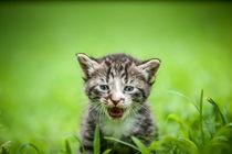 cute kitty by digidreamgrafix