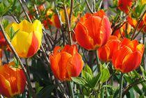 Blütentraum by Elke Balzen