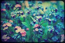 Pink & Blue. von rosanna zavanaiu