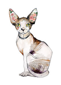 Berenice the Sphynx by Sara Ligari