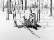 Land-conservation-pencil-28-x-38-cm