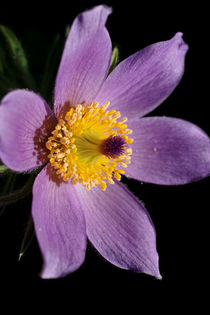 Im Inneren der Blüte by Bastian  Kienitz