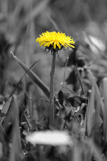 Gelber Fleck - yellow spot by ropo13