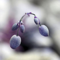 Blütenbild by Jens Berger