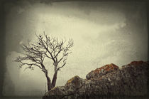 Tree on a rock by Alexandr Verba