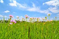 Frühlingswiese von Jens Uhlenbusch