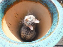Potted Cat by Rebekah Tyler-Harris
