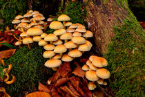 Sulphur Tufts by Keld Bach