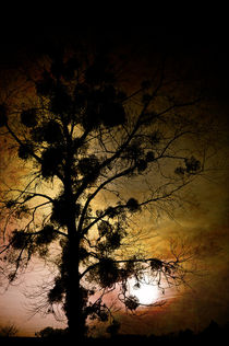 'The Sunset Tree' by loriental-photography