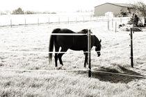 Pferd auf der Weide by Bastian  Kienitz