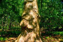 POWER OF A TREE by Maks Erlikh
