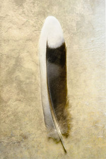 Mourning Dove tail feather by Barbara Magnuson & Larry Kimball