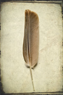 Bifr-0033-texturebkg-bird-feather