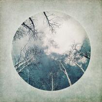 round treetops II by Priska  Wettstein