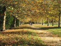 Autumn Walk by Rebekah Tyler-Harris