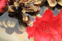 Gold-Rot von Silke Bicker
