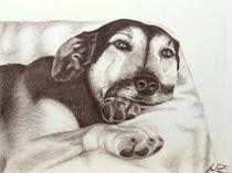 02-03-schaeferhundsepia