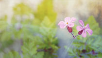 small pink beautiful by Eva Stadler