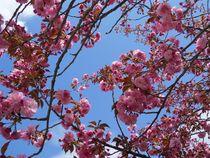 spring tree by Wolfgang Schweizer