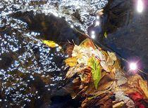 leaves in water von Wolfgang Schweizer