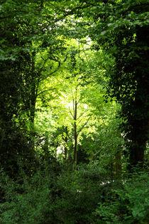 Grün im Grün von lorenzo-fp