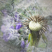 Dandelion Cracked by Roger Butler