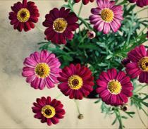 Floral Days by rosanna zavanaiu