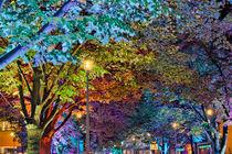 Color Leaves - Bunte Blätter  von Steffen Klemz
