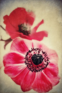 Sweet Anemone II  von AD DESIGN Photo + PhotoArt