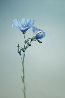 Blaue Blüte von Bastian  Kienitz