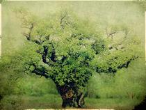 Ye Old Oak Tree by Linde Townsend