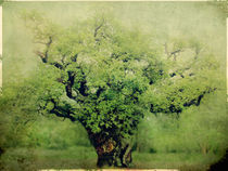 Yeoldoaktree