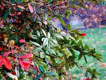 Thorns, Berries and Leaves  by bebra