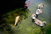 im Teich ~2~ von Christine  Hofmann