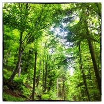 Romantische Waldlandschaft von Gina Koch