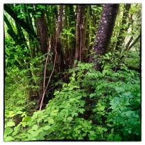 Waldlandschaft bei leichtem Regen und Nebel von Gina Koch