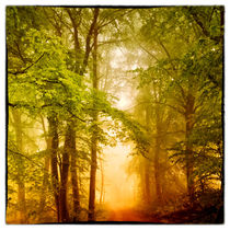 Romantische Waldlandschaft by Gina Koch