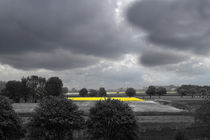 Gelber Streifen im Frühling - Yellow stripe in the spring von ropo13