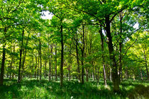 The Peaceful Forest  by David Pyatt