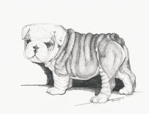 Bull Dog Puppy by Brandy House