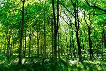 Summer in the forest von David Pyatt