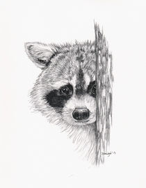 Peeking Raccoon by Brandy House