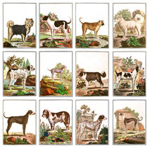 Dogs In Vintage Style by vintage