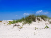 Sand Dune and Sea Oats by Louise Heusinkveld