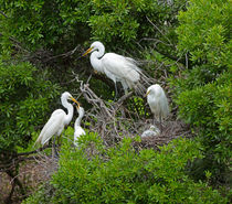 Egret Rookery by Louise Heusinkveld